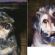 Pet Portraits – The Best Way to Preserve the Memory of Your Special Family Friend